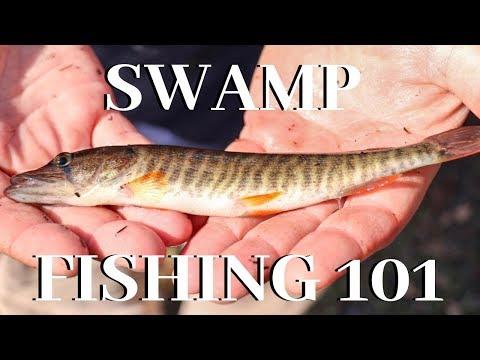 Swamp Fishing 101