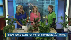Great houseplants for winter in Portland
