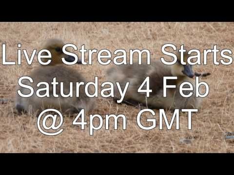 Herman's Live Stream Announcement Today at 4pm GMT