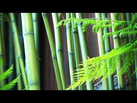 Zen Garden - Bamboo..te Relaxation - Transcendental Bliss - Mindfulness