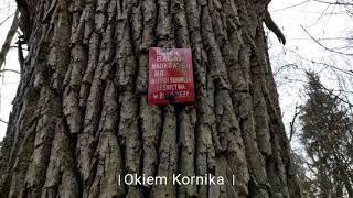 wstawki cz.2 pomnik przyrody obiekt badań naukowych cisza las relaks Lasy państwowe dąb sosna Polska