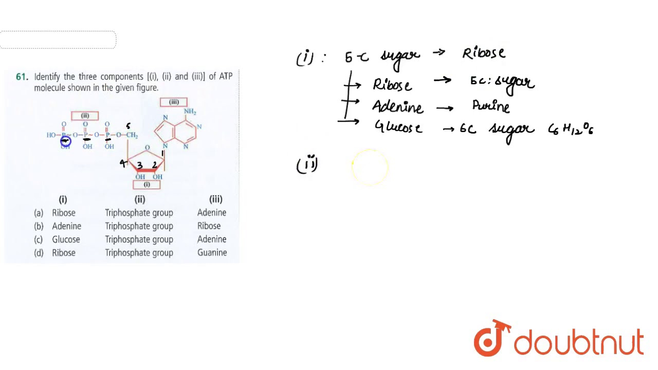Identify The Three Components I Ii And Iii Of Atp Molecule Shown In The Give Figure Youtube
