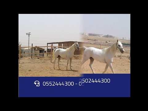 شبوك الرياض الشبوك بالرياض شبوك hqdefault.jpg