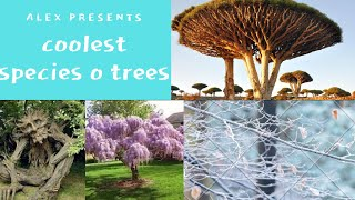 10 coolest species of trees