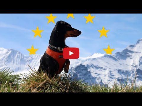 A Vine Video Compilation of Crusoe the Celebrity Dachshund ...