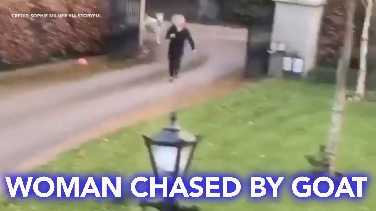 Woman in Ireland chased into her home by goat on the loose