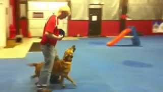 """cleveland-akron Dog Obedience Training"" Sit Means Sit Cleveland Akron"