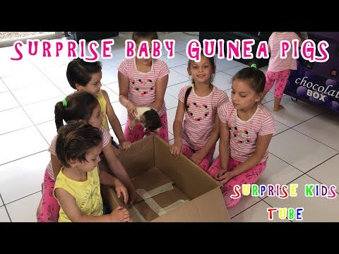 Surprise Baby Guinea Pigs