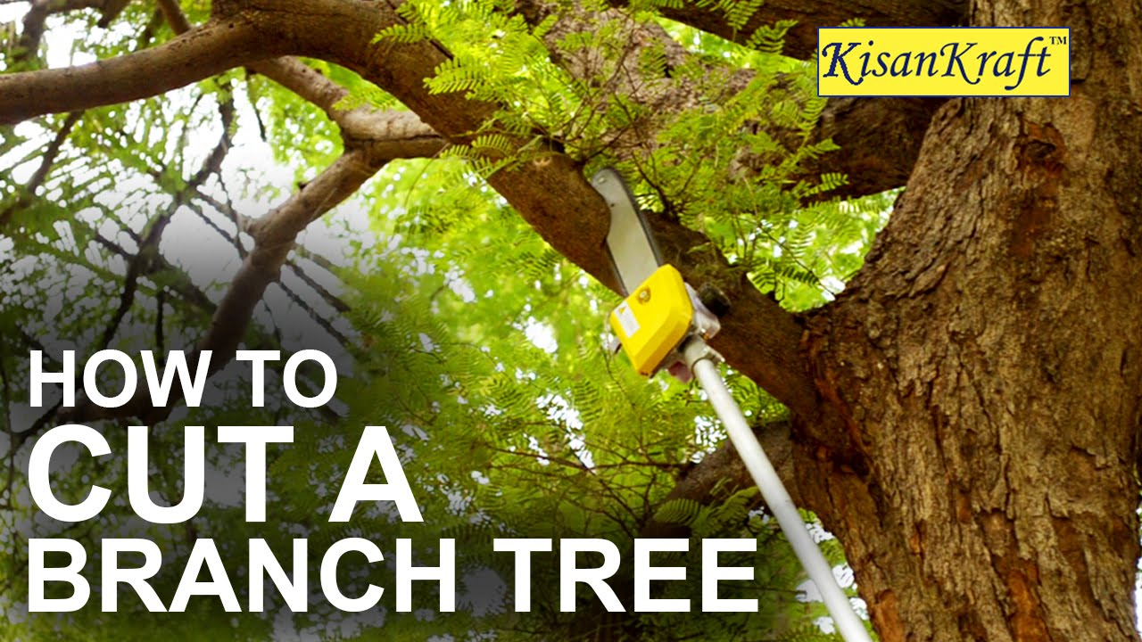 How To Trim Tree Branches Yourself Mycoffeepot Org