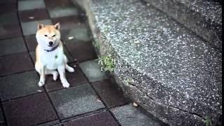 講述一隻在都市家庭中的柴犬得故事,飼養這隻柴犬的女主人懷孕而被拋棄...