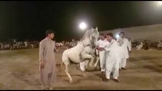 Horse Dance/Ghora Dance in punjab pakistan
