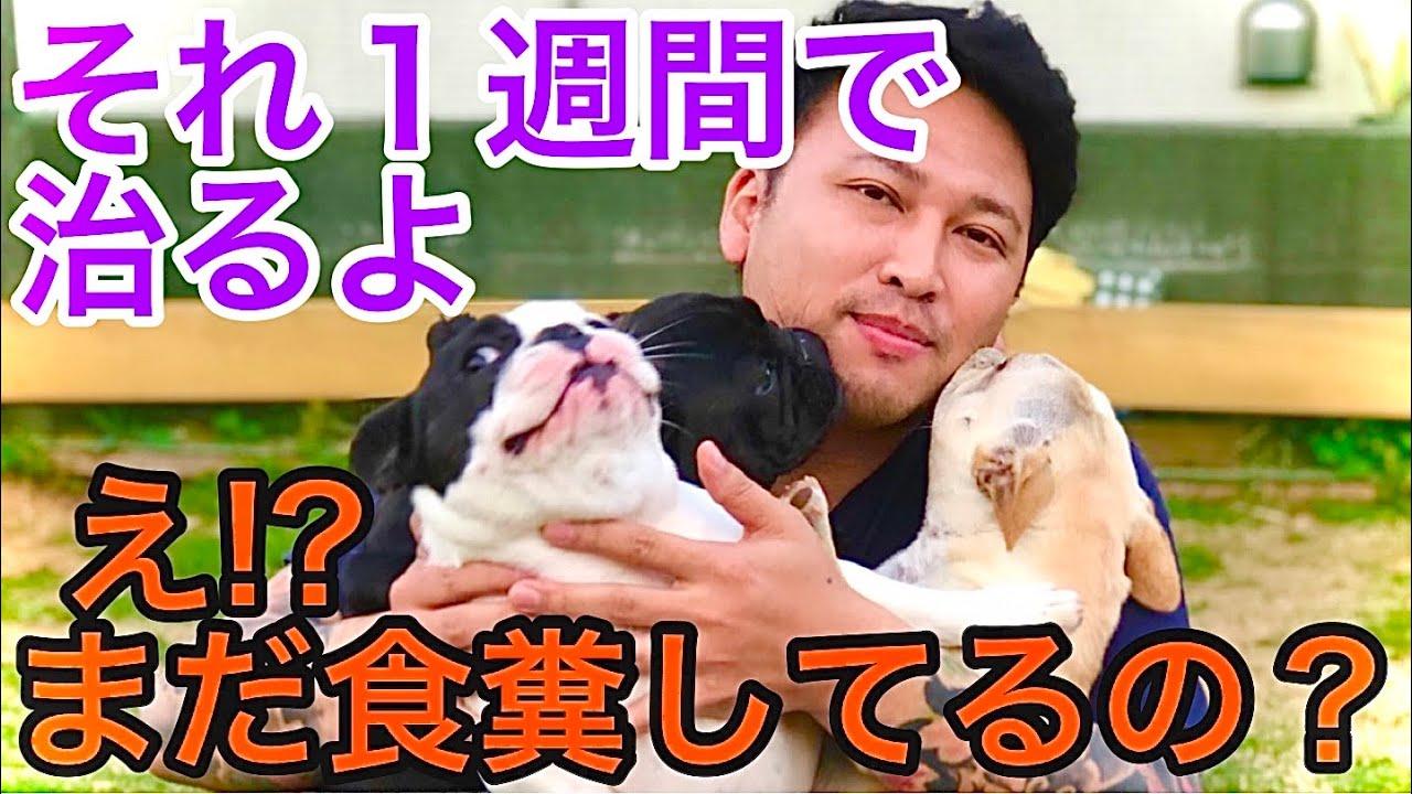 【劇的解決法】犬の食糞なんかすぐ治せるよ。目からウロコな方法をドッグブリーダーが伝授。