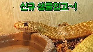 [파브르2세] 프랜쥬 신규 생물입고 !! 뱀,전갈,타란…