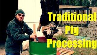 Traditonal Pig Processing - Idaho Pasture Pig