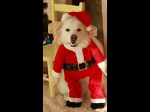 "Dog sings ""Santa Claus is Coming to Town"""