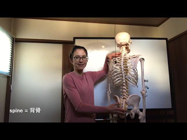English yoga lesson: Movement of the spine (英語でヨガ:背骨の動きについて)