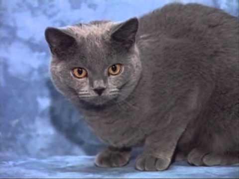 Le monde du Chat