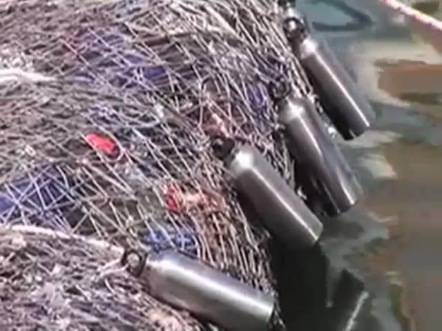 Plastika u okeanima ulazi u lanac ishrane