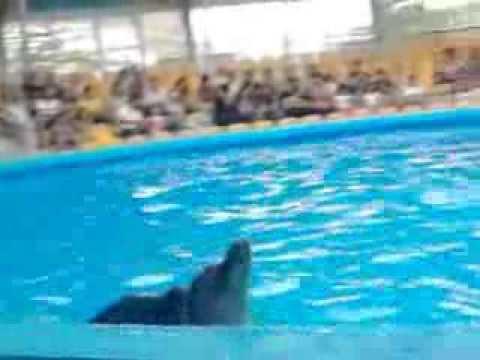 The Dolphinarium In Yerevan. дельфинарий в Ереване