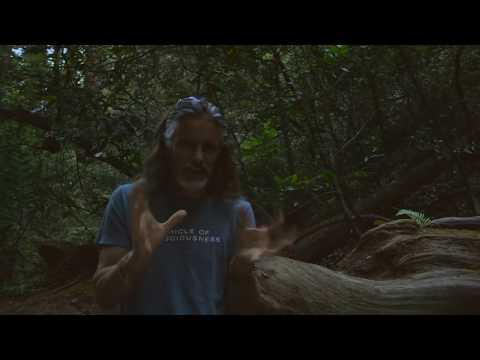 Prashanti Video Journal: Kutki the High Himalayan Hepatic Herb