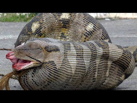 8 Household Animals Who Ate Their Owners Youtube