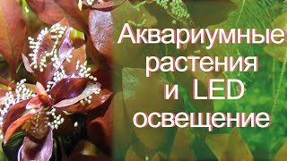 Аквариумные растения и светодиодное освещение