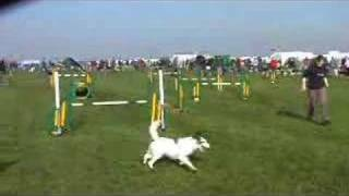 Cas - Agility @ Dashin Dogs 2007 Uk