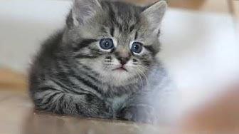 Lustige Katzenbabys