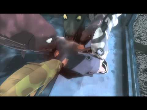 PADAK - Official Trailer 1