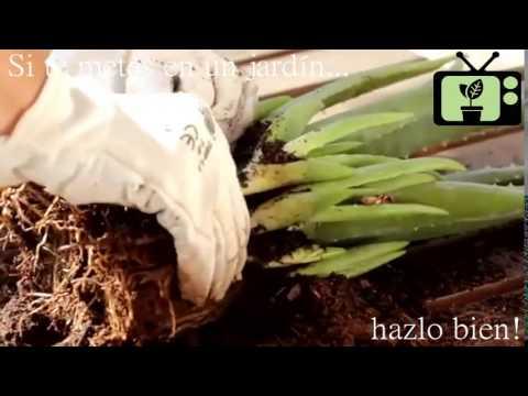 Consejos de Jardineria] Consejo 2 | Jardinería en Casa - YouTube