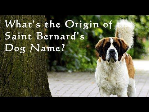 What's the Origin of the Saint Bernard's Dog Name