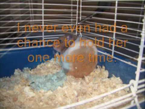 My Hamster Winnie Peaceful Death