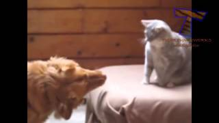 Cats  punching dogs Funny Clip