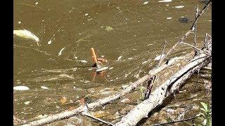 ПОПЛАВОК ПОВЕЛО ПОД КОРЯГУ !!ЭТО ХОРОШИЙ КАРАСЬ!!! Рыбалка на малой речке 2019 , fishing and carp