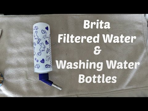 Filtered Water & Washing Lixit Bottles: Guinea Pig Care