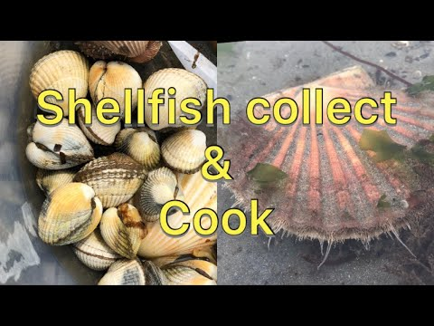 Coastal Foraging - Shellfish Beach Clean And Cook - Clams, Scallops, Cockles And More!