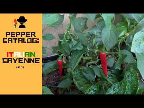 Farmer George's Pepper Catalog: Italian Cayenne #001