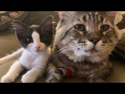 Коту было одиноко и он начал воровать себе друзей!