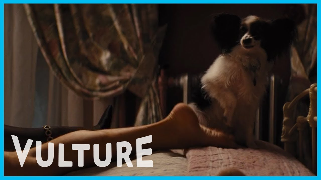 Download Animals in Movies are Scandalized by PDA