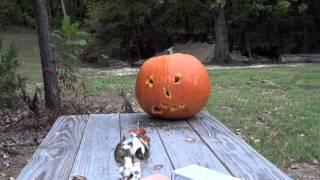 doc holliday 45 long colt vs pumpkin