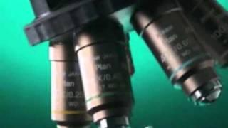 Lab Microscope Video For The Nikon Eclipse 50i