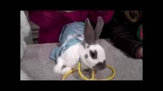 Bunny Rabbit Costume Contest - Santa Rosa 4H