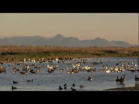 Your Sacramento Wildlife Refuge