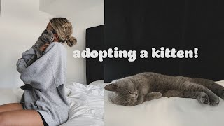 vlog: bringing home our new kitten!