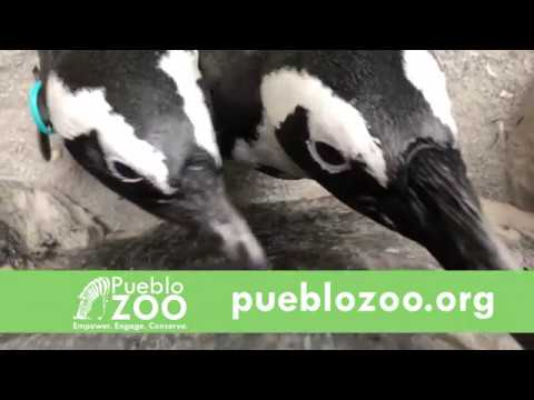 Visit the Pueblo Zoo