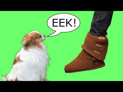 How To Get Dogs Not Scared Of Feet
