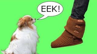 How To Calm Your Dogs Worst Fears - Fear Of Feet