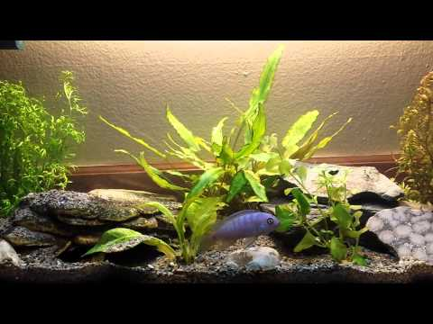 All real plant life 5.5 gal wide freshwater fish t