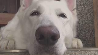 11CLIP(イレブンクリップ)は、愛犬動画を通じて、愛犬と家族の幸せな時...