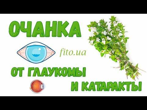 Очанка для глаз от глаукомы и катаракты - применение, свойства